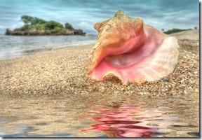 caracola_shell