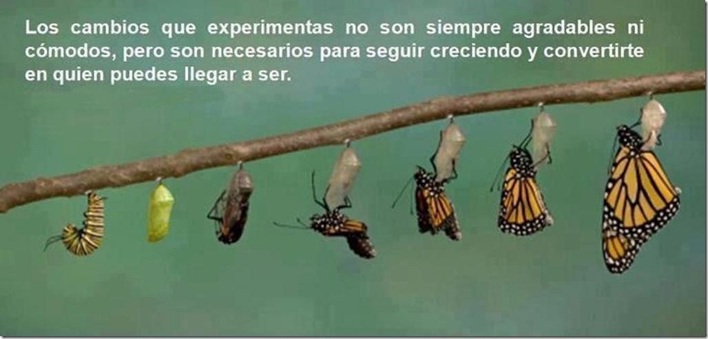 gusano crisálida y mariposa
