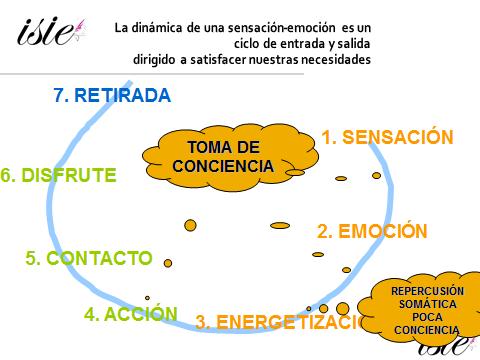 ciclo-emocion